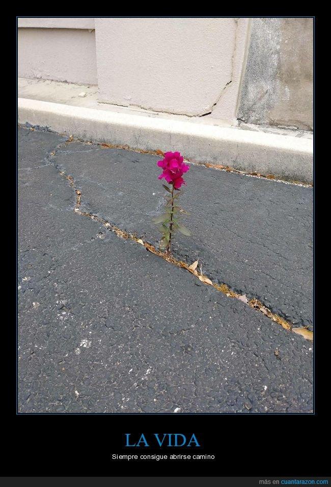 asfalto,flor,wtf