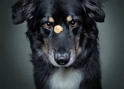Enlace a Divertidas expresiones de perros intentando atrapar comida al vuelo