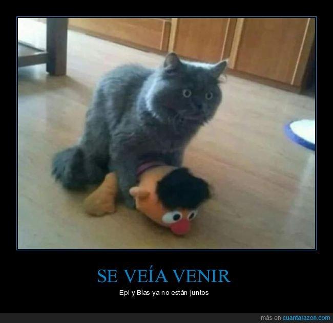 epi y blas,gatos,wtf