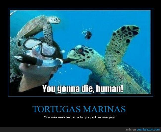 buceador,tortuga,tortuga marina,tubo