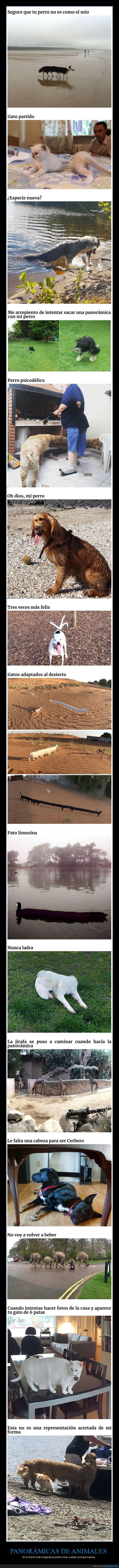 animales,fails,panorámicas