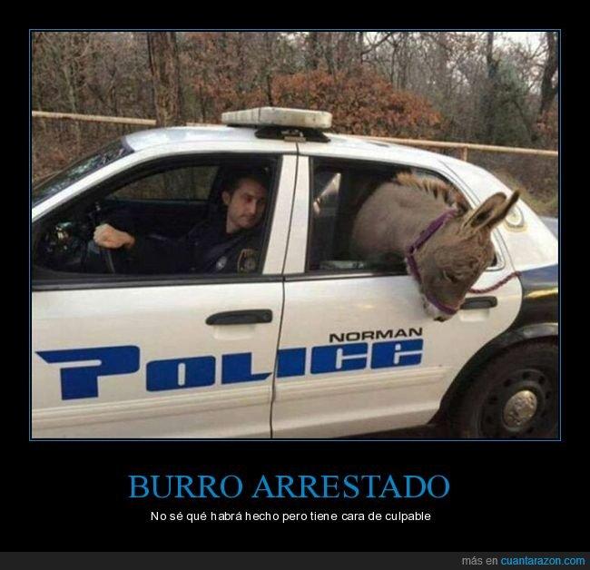burro,coche,policía,wtf