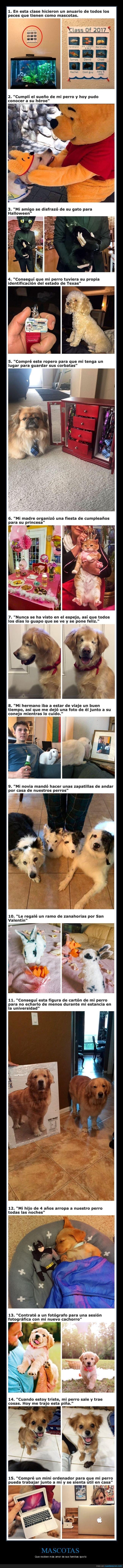animales,mascotas,mimados