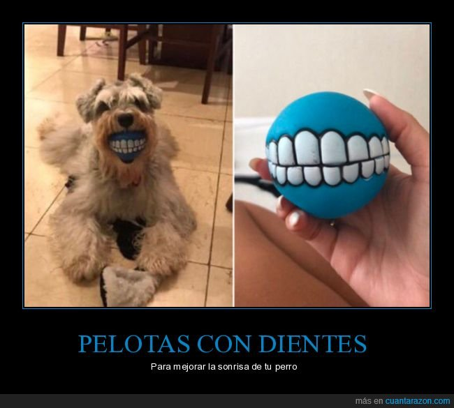 dientes,pelota,perros