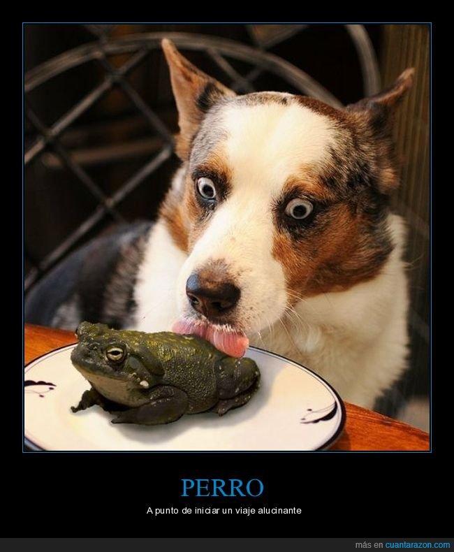 chupando,perro,sapo,wtf