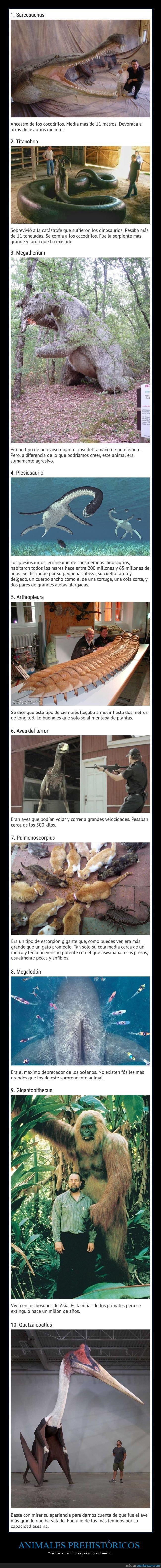 animales,curiosidades,gigantes,prehistóricos