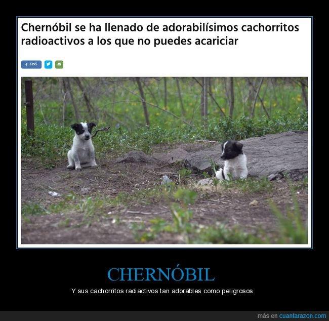 acariciar,cachorros,chernobyl,radiactivos