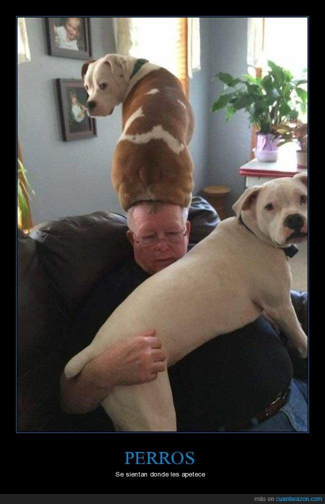 cabeza,perros,sentado