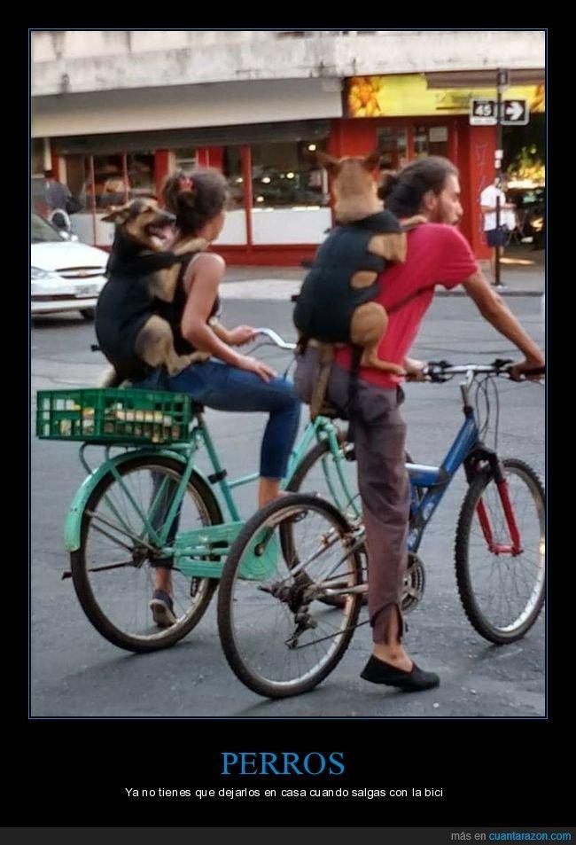 bicicletas,perros,wtf