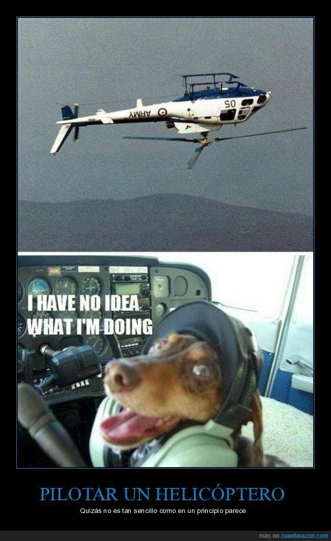 al revés,helicóptero,ni idea,perros