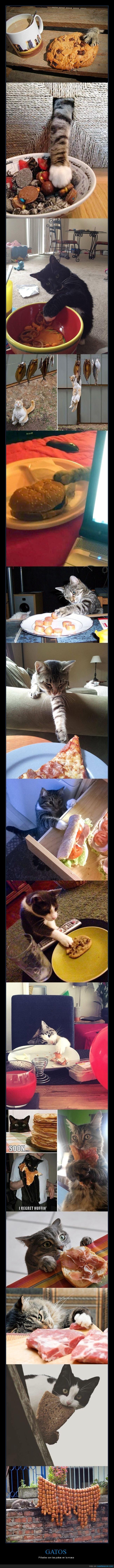 comida,gatos,pillados