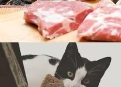Enlace a Gatos pillados con las patas en la masa