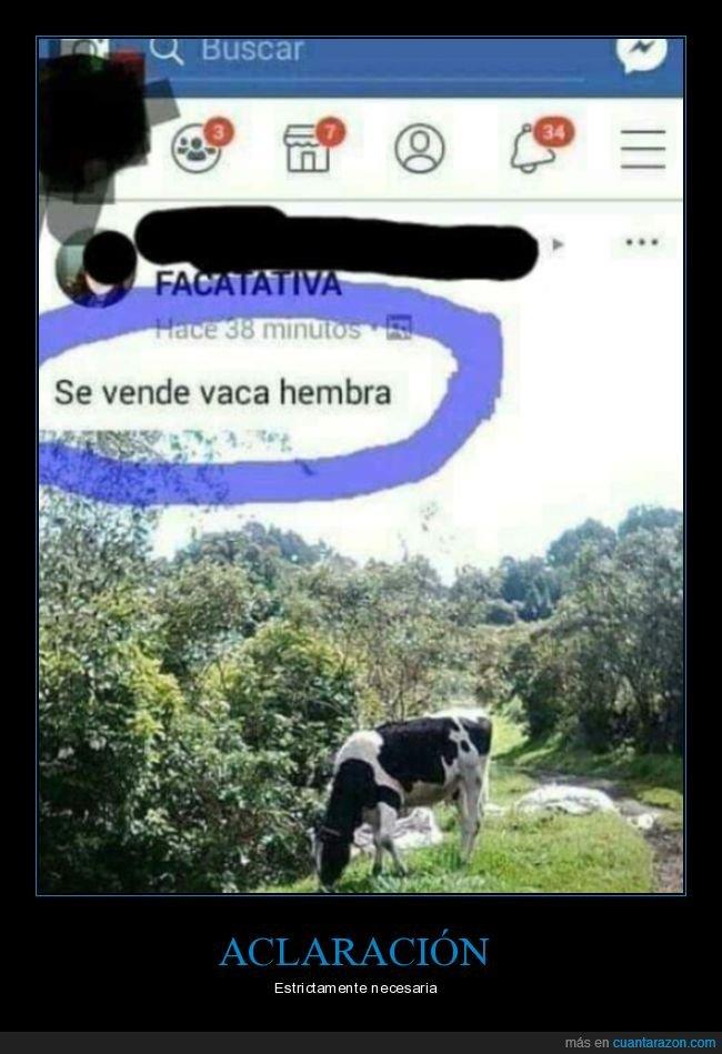 anuncio,facebook,hembra,vaca