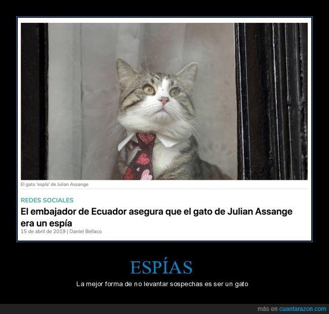 espía,gato,julian assange,wtf