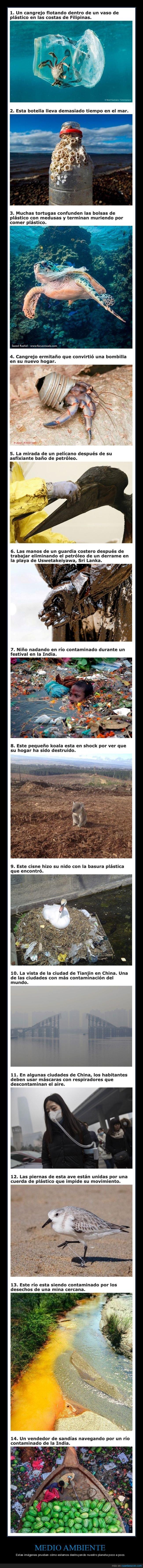 contaminación,medio ambiente