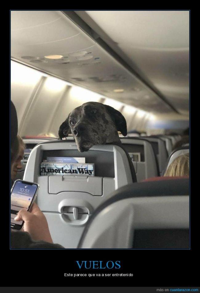 avión,perros,wtf