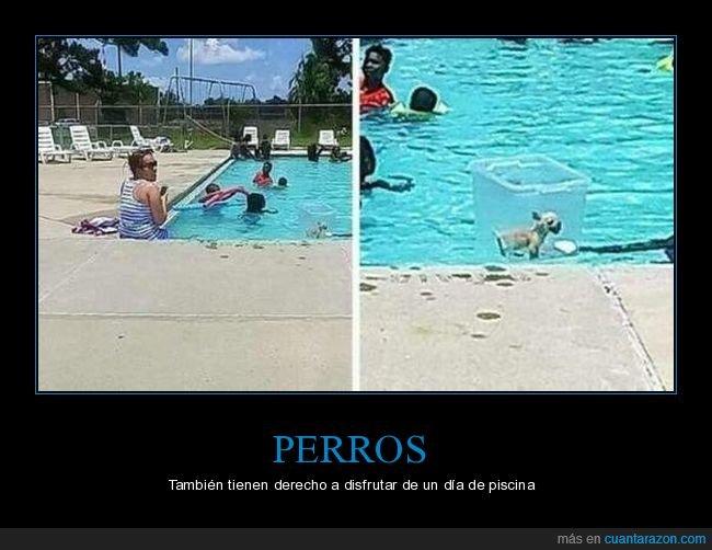 perro,piscina,wtf