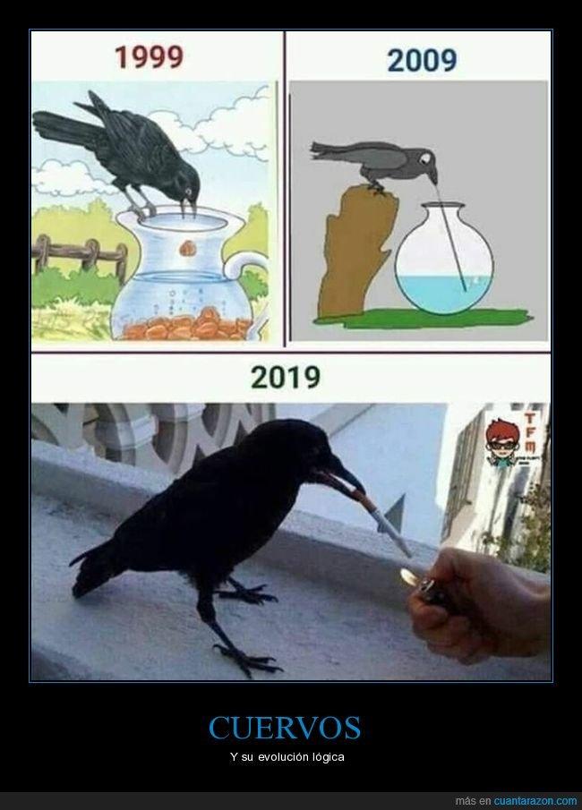 cuervos,evolución,fumando