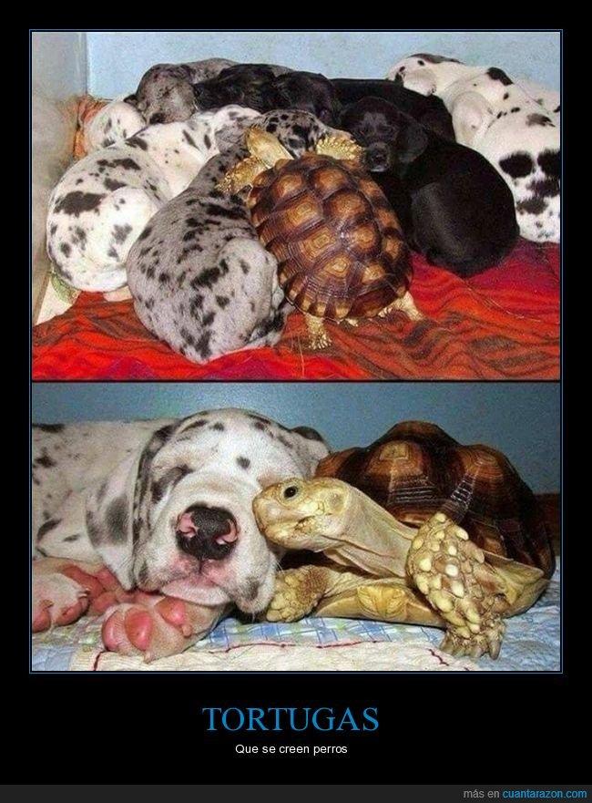 perros,tortuga,wtf