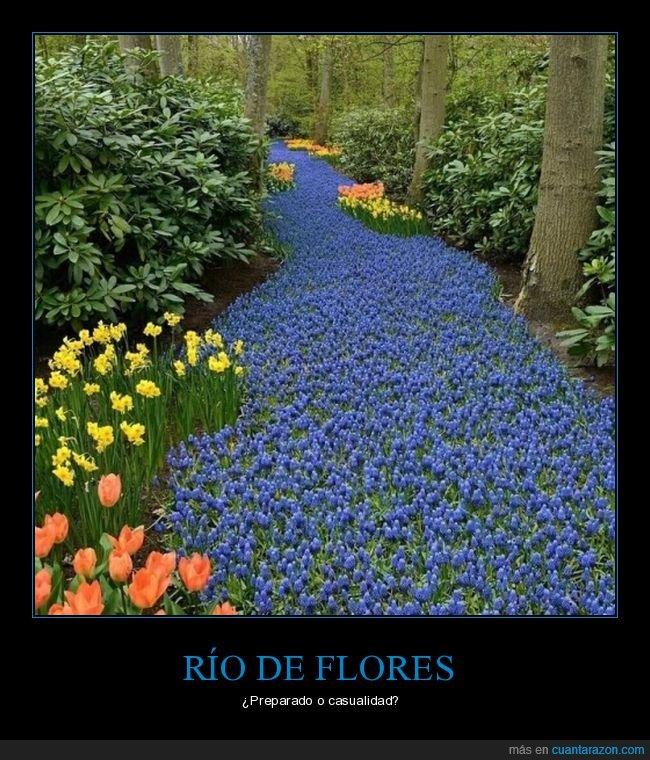 azules,flores,río