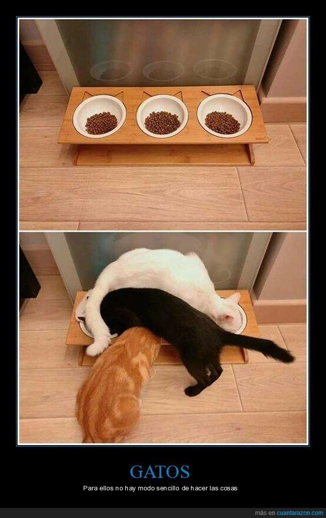 comedero,comida,gatos,liados
