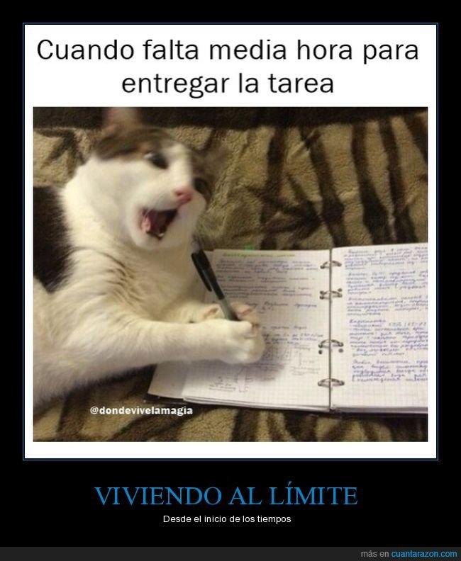 deberes,gato,tarde,tarea