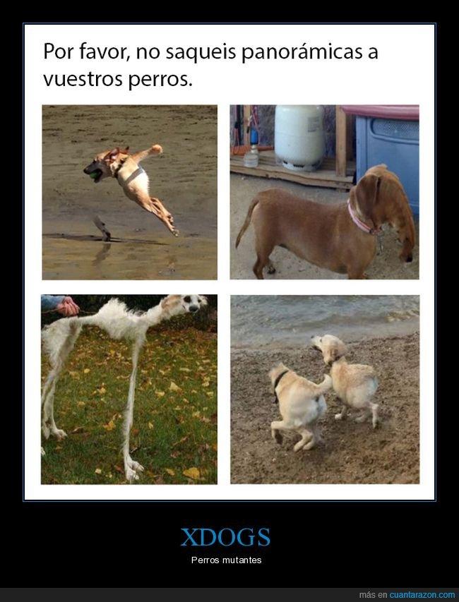 mutante,panoramica,perros