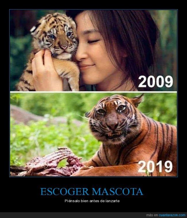 cachorro,mascota,tigre