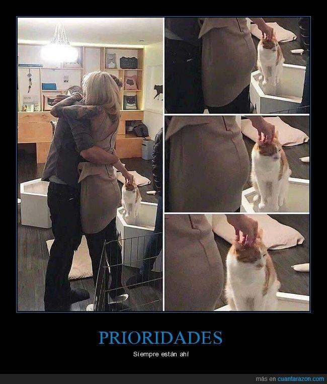abrazo,amor,cariño,gato