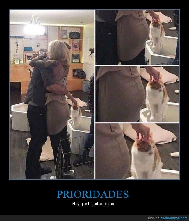 gatos,mimos,prioridades,saludo