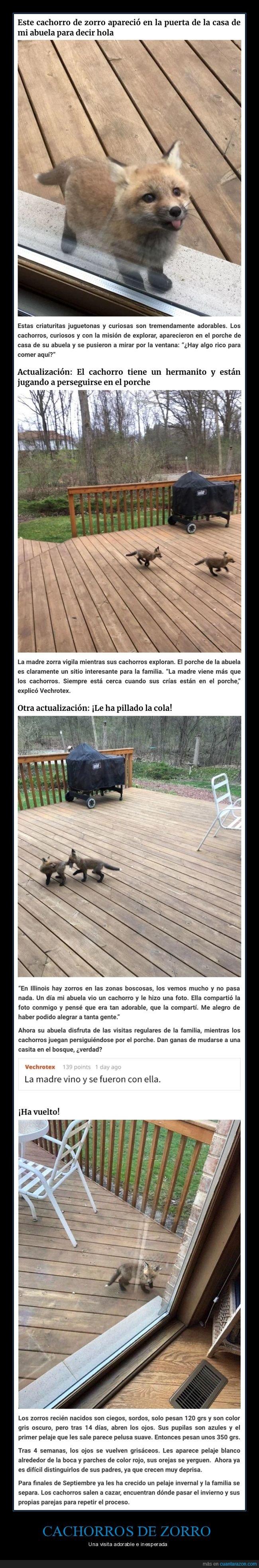 cachorros,zorros