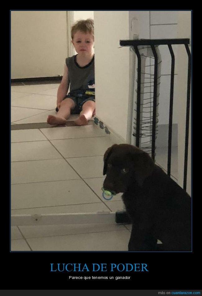 chupete,niño,perro