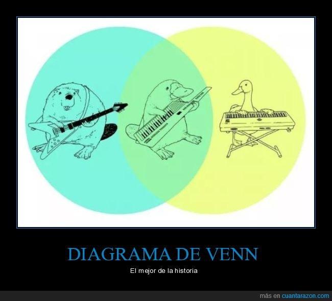absurdo,castor,diagrama de venn,gráfico,guitarra,órgano,ornitorrinco,pato