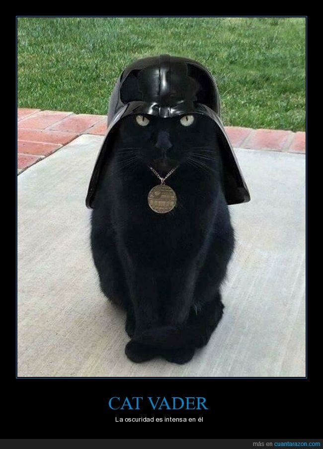 darth vader,gatos,star wars