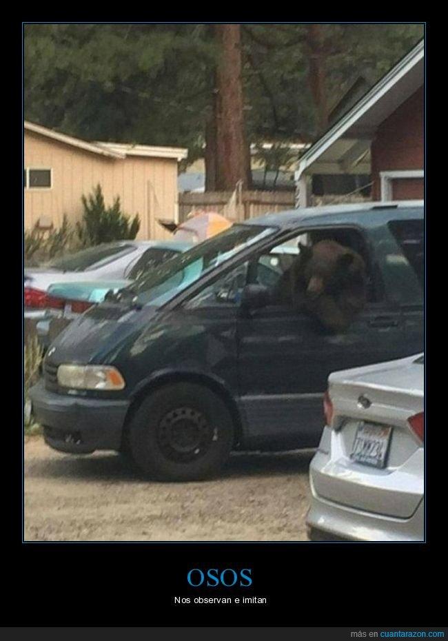 furgoneta,oso,wtf