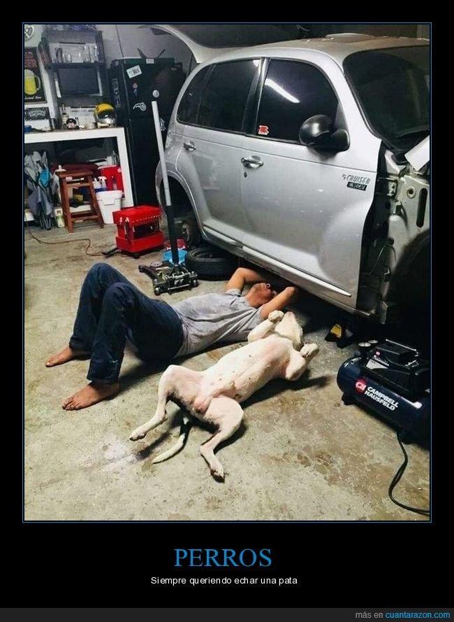 coche,mecánico,perros