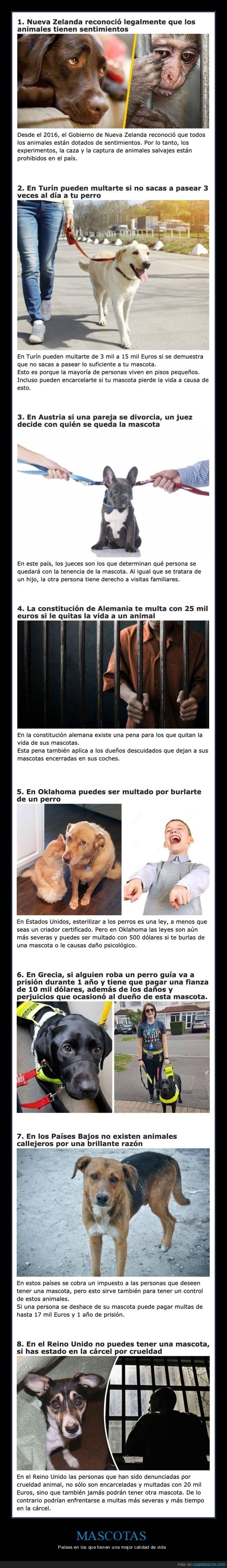 animales,mascotas,países