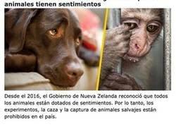 Enlace a Países donde las mascotas tienen la mejor calidad de vida