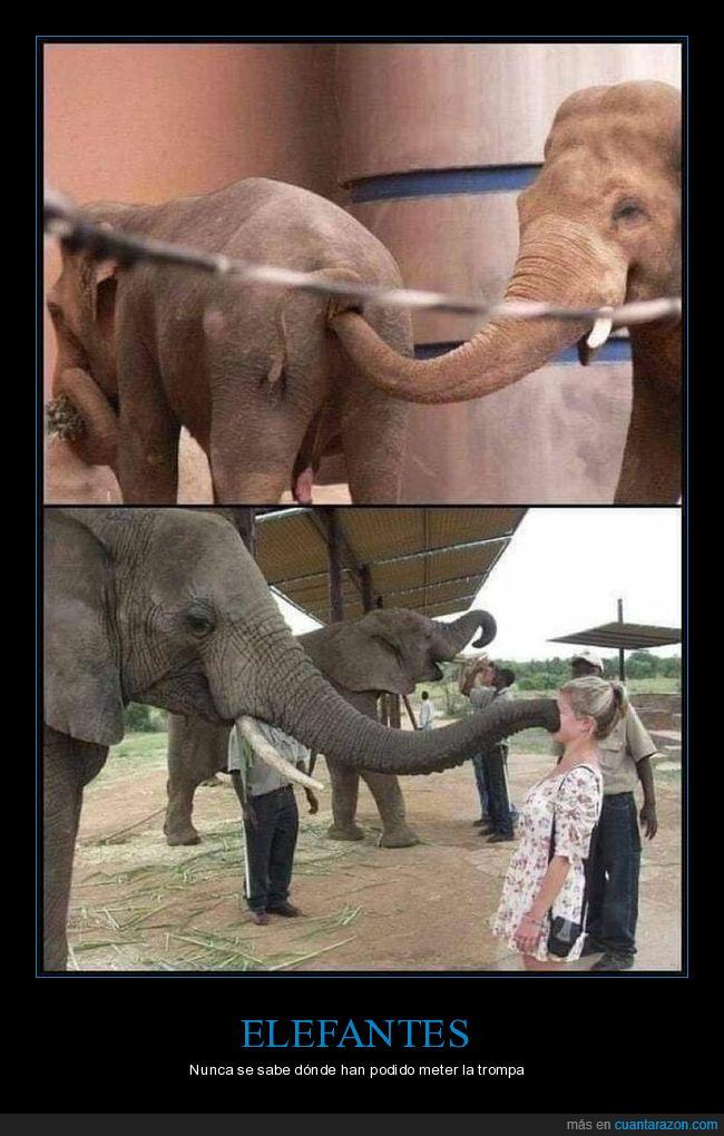 cara,culo,elefantes,trompaa