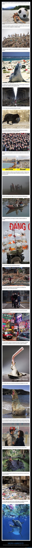 contaminación,humanidad,indiferencia,medio ambiente