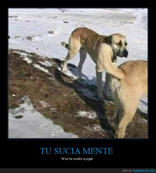mindfuck,perros