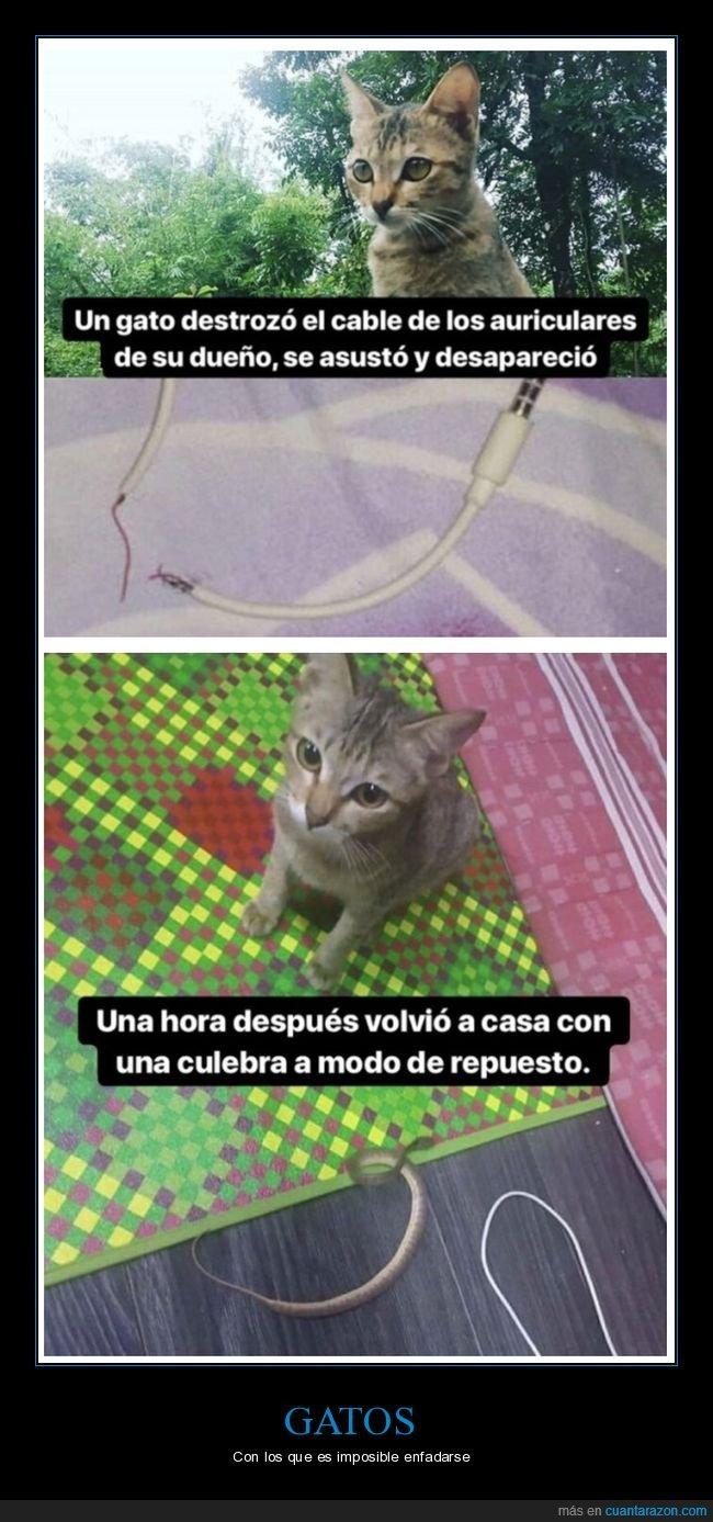 cable,culebra,gato,repuesto,romper