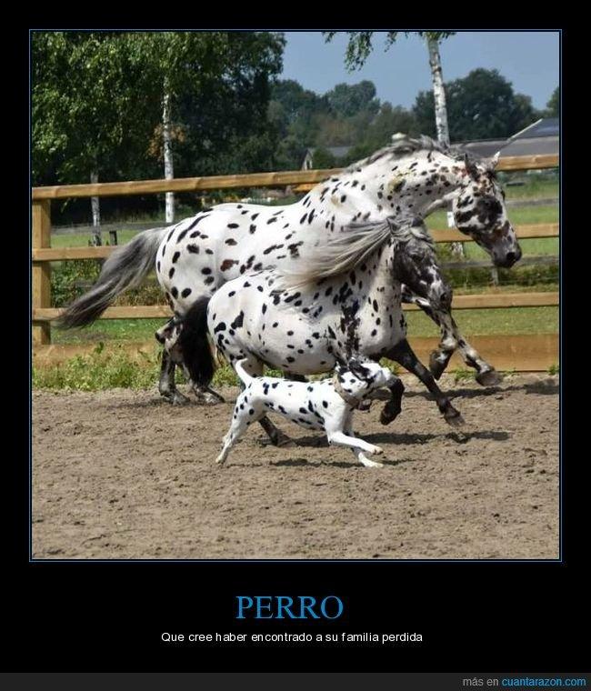 caballos,parecidos,perros