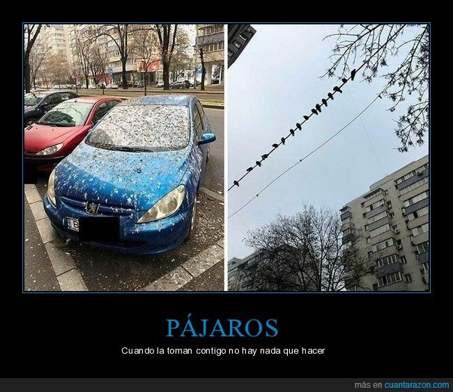 cagadas,coche,fails,pájaros