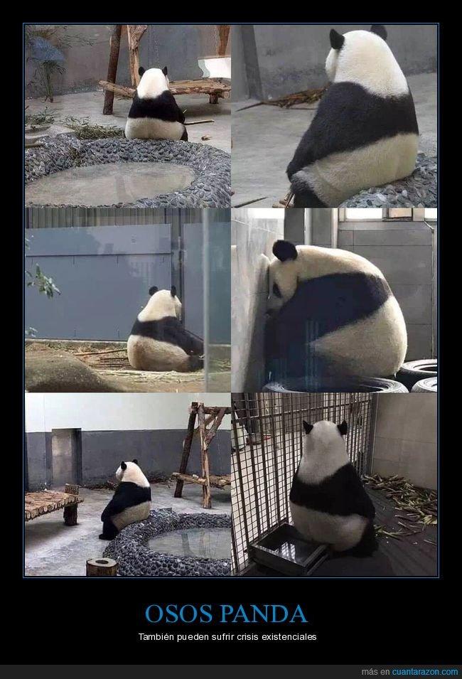 crisis existencial,panda,sentado,wtf