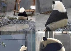 Enlace a Crisis panda