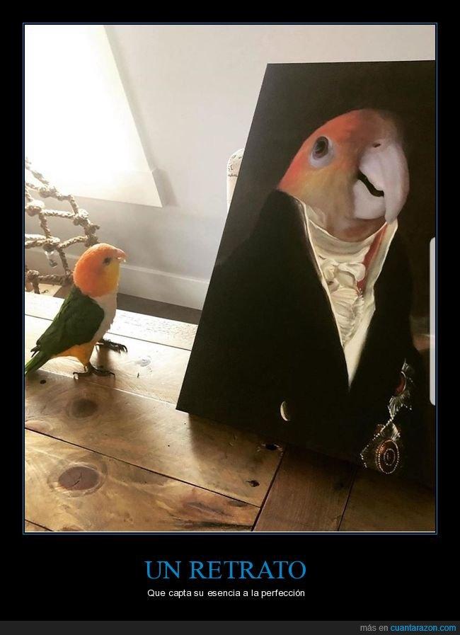 cuadro,pájaro,retrato,wtf
