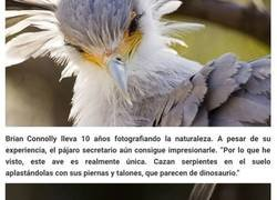 Enlace a El pájaro secretario es tan hermoso que podría ser fácilmente un personaje de Pixar
