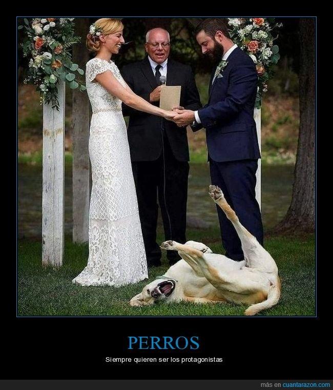 boda,perros,photobomb