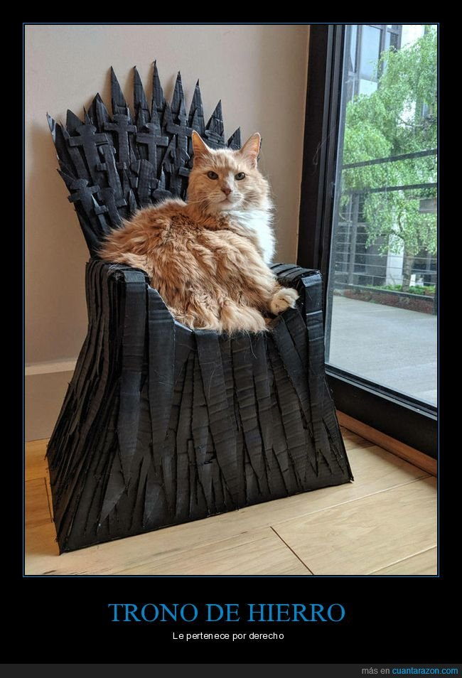 gatos,juego de tronos,trono de hierro